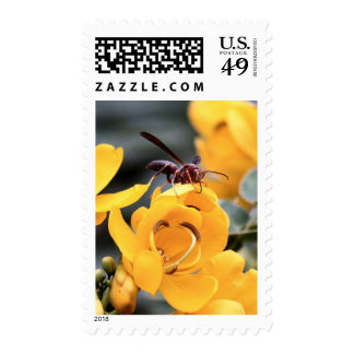 Paper Wasp Postage Stamps