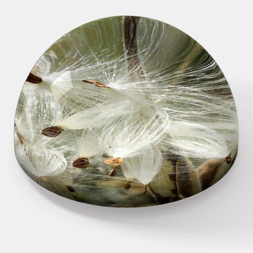 Paper Weight Milkweed Seeds