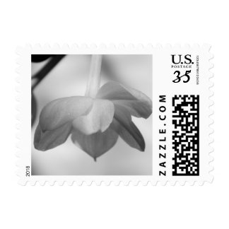 Paper White Postcard Stamp