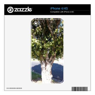 Paperbark Tree Skin For iPhone 4