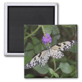 Paperkite Butterfly 2 Inch Square Magnet