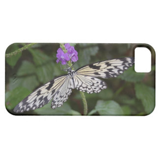 Paperkite Butterfly iPhone SE/5/5s Case