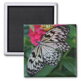 Paperkite Butterfly Magnet