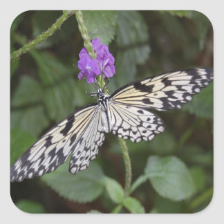 Paperkite Butterfly Square Sticker