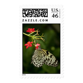 Paperwhite Butterfly Postage