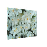 Paperwhite Narcissus Delicate White Flowers Canvas Print