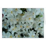 Paperwhite Narcissus Delicate White Flowers Card