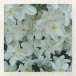Paperwhite Narcissus Delicate White Flowers Glass Coaster