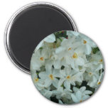 Paperwhite Narcissus Delicate White Flowers Magnet