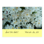 """Paperwhite Narcissus """"Save the Date"""" Postcard"""