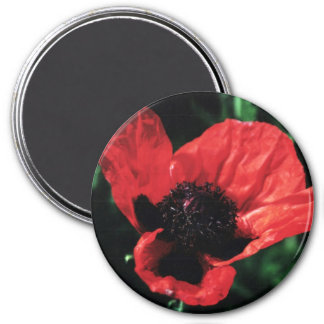 Papery Red Poppy Refrigerator Magnets
