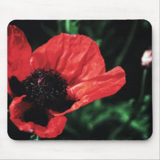 Papery Red Poppy Mousepads