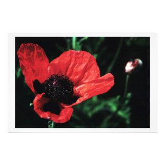 Papery Red Poppy Art Photo