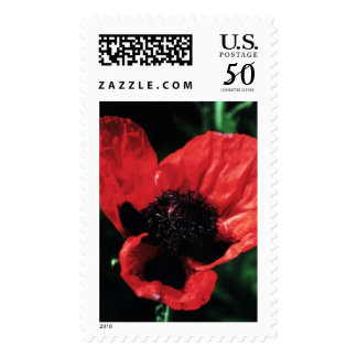 Papery Red Poppy Postage