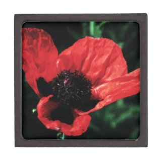 Papery Red Poppy Premium Gift Boxes