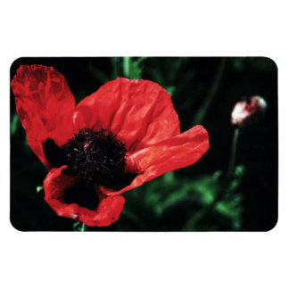 Papery Red Poppy Flexible Magnet