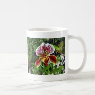 Paph Fiordland Sunset Orchid Coffee Mugs