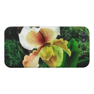 Paph Hellas Westonbirt Orchid Cover For iPhone 5/5S