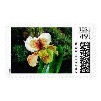 Paph Hellas Westonbirt Orchid Postage