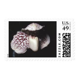 Paphiopedilum godefroyae stamp