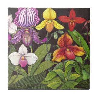 Paphiopedilum Lady Slipper Orchids Tile