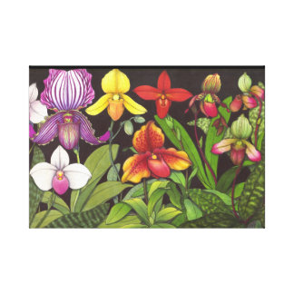 Paphiopedilum Ladys Slipper Orchids Wrapped Canvas