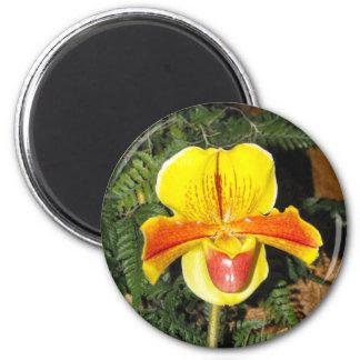 Paphiopedilum magnet