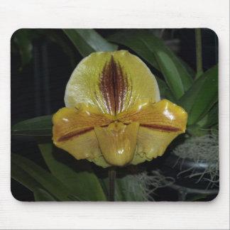 Paphiopedilum Orchid Mouse Pad
