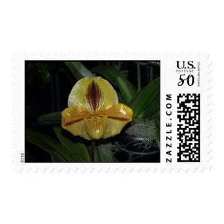 Paphiopedilum Orchid Postage