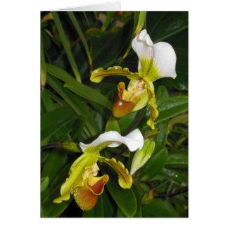 Paphiopedilum Orchids Card