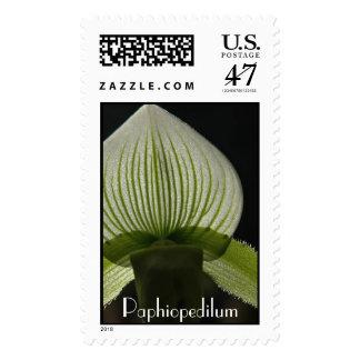 Paphiopedilum  postage