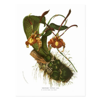 Papilio de Oncidium Tarjeta Postal