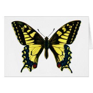 Papilio machaon card