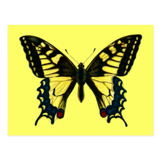 Papilio machaon postcard