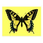 Papilio machaon postcards