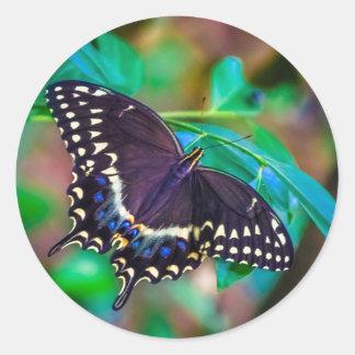 Papilio polyxenes round stickers