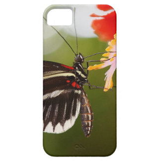 Papilio Rumanzovia butterfly iPhone SE/5/5s Case