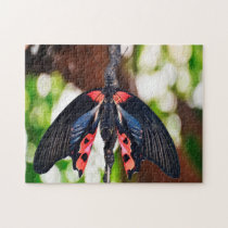 Papilio Rumanzovia Butterfly. Jigsaw Puzzle