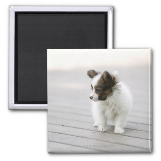 Papillon 2 Inch Square Magnet
