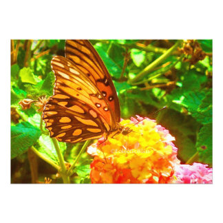 Papillon (Butterfly) Personalized Announcement