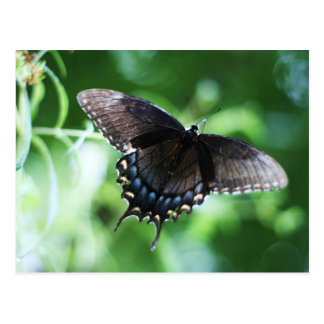 """papillon de jardin"" by Coressel Productions Postcard"