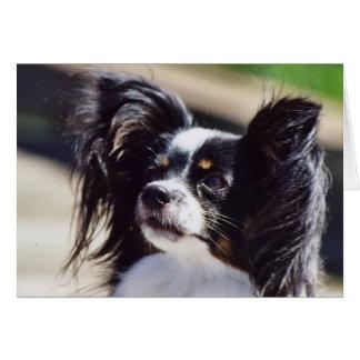 """Papillon"" Dog Photo Greeting Card"