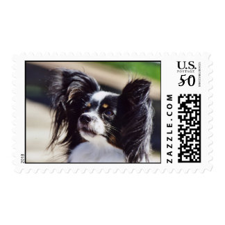 """Papillon"" Dog Photo Postage Stamp"