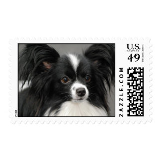 Papillon Dog Postage Stamp