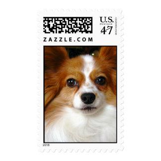 Papillon Dog Postage Stamp