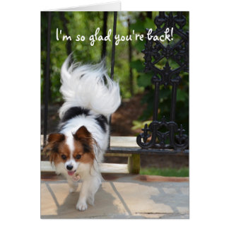 Papillon I'm so Glad You're Back Greeting Card
