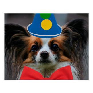 papillon puppy dressed as a clown poster