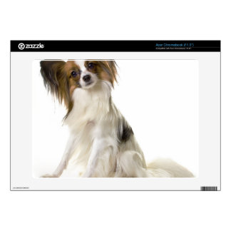 Papillon Puppy interrogative Skins For Acer Chromebook