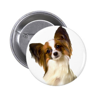 Papillon puppy Isolated on editable Background Pil Pinback Button