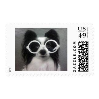 Papillon Puppy Postage Stamp
